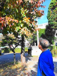 福祉施設 柿 ボランティア 障害者