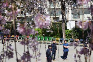 福祉 桜 お花見