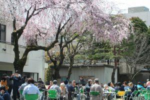 福祉 お花見 桜