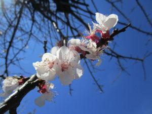 春の足音🌺